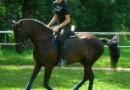 Reiterferien – Urlaub auf dem Reiterhof